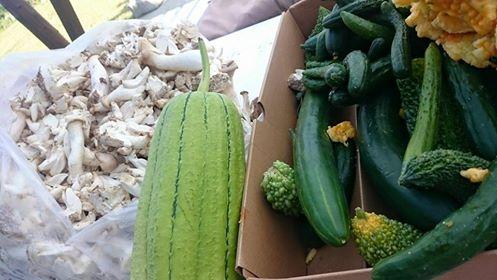 めっちゃ野菜もろた💛